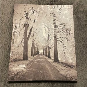 Photo of trees and path